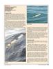 Marine Technology Magazine, page 37,  Jun 2006
