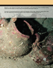 Marine Technology Magazine, page 64,  May 2008 Greg Trauthwein