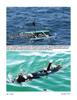 Marine Technology Magazine, page 36,  Oct 2012 communication protocols