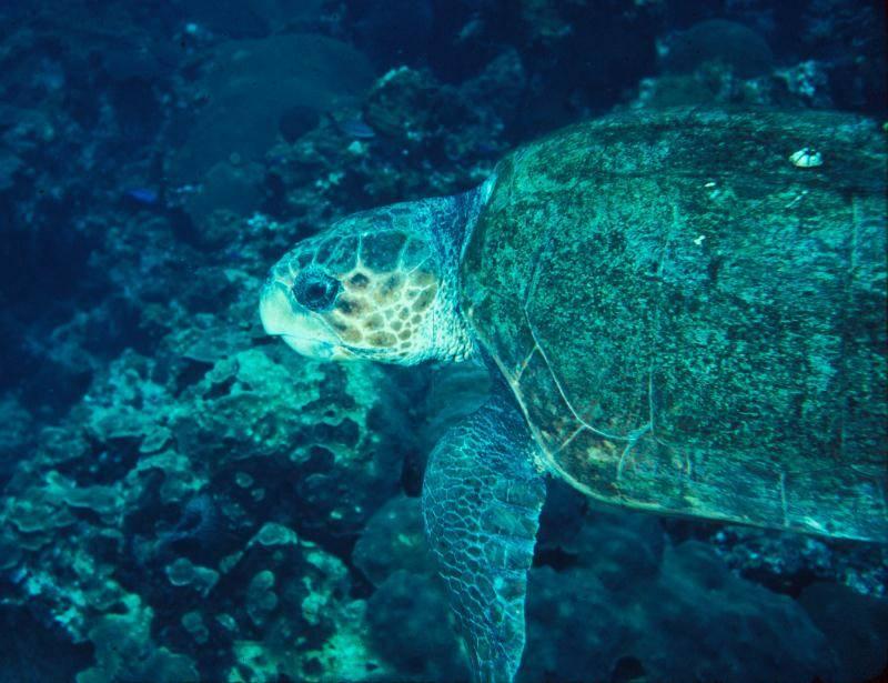 sea turtle restoration project