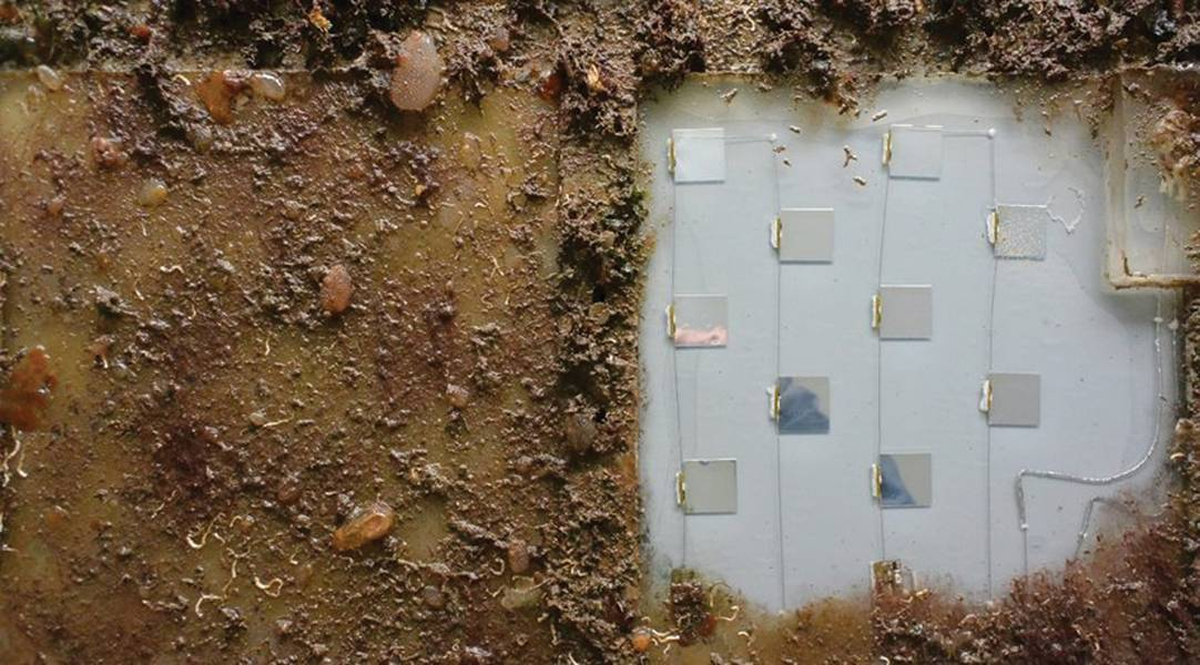 Εικόνα 1: Το πρωτότυπο UV-C διατηρήθηκε καθαρό από την βιοσυσσώρευση στο λιμάνι της Μελβούρνης (Αυστραλία). Στα αριστερά βρίσκεται ένα συγκρότημα σιλικόνης αναφοράς χωρίς UV-C, το οποίο είναι απολύτως βιολογικό (προσφέρεται για δοκιμές στην ομάδα επιστήμης και τεχνολογίας της άμυνας).