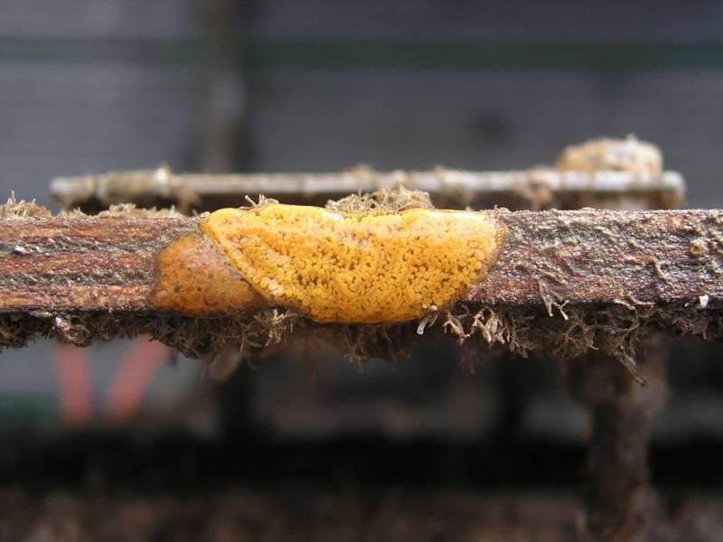 एक धातु सतह पर biofouling जीवों को Encrusting। क्रेडिट: मारिया साल्टा