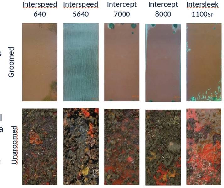 Dos años de aseo. Paneles recubiertos de 6 pulgadas x 12 pulgadas cada semana (parte superior) en comparación con los paneles sin apilar (parte inferior). Foto Cortesía de Greensea Systems