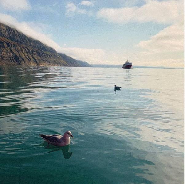 Longyearbyen هي أكبر مدينة في سفالبارد ، وقد تصبح واحدة من أوائل المستهلكين على نطاق واسع للهيدروجين الأخضر أو الأمونيا المنتجة من مزارع الرياح في فينمارك. الصورة الائتمان زيارة سفالبارد.