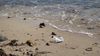 Polystyrene pollution at the tide's edge. Photo by Jayne Doucette, Woods Hole Oceanographic Institution