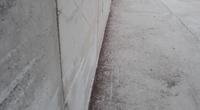 Dead weevils along a wall of a bulk terminal warehouse (Photo: ABTO)