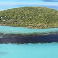 Image Credit: Mauritian Wildlife Foundation