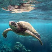 Hapag-Lloyd for example refuses to transport turtles on board the ships (Photo: Hapag-Lloyd)