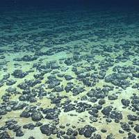 Manganese nodules on the Atlantic Ocean floor off the southeastern United States, discovered in 2019 during the Deep Sea Ventures pilot test. (Photo: NOAA)