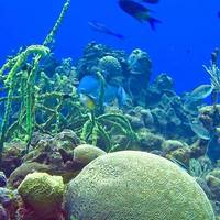 Photo: National Oceanic and Atmospheric Administration