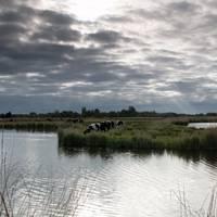Picture showing similar polder Courtesy AdobeStock
