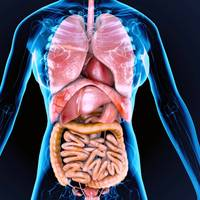 The human body's organs and blood could be compared to individual components and the fluid within hydraulic/lubrication system. © PIC4U/AdobeStock