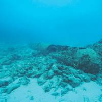 What began as a typical grounding response quickly turned into anything but when the initial dive survey turned up a World War II era torpedo and unexploded mines around the vessel.