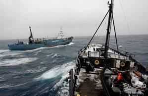 (Photo: Sea Shepherd)