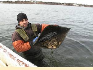 Oyster farmer Perry Raso at Matunuck Oyster Farm in Rhode Island (Photo courtesy of the NOAA)