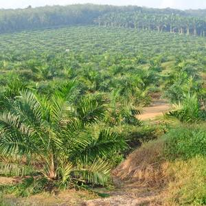 France to Restrict Use of Palm Oil in Biofuels