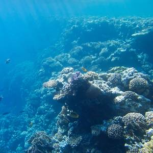 Coral Reefs at Risk of Dissolving: Study