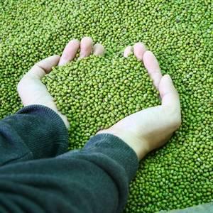 Brazilian Soya Bean Exports Soar