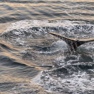 Enviros Petition Feds for Whale-saving Slow Vessel Rule off Florida