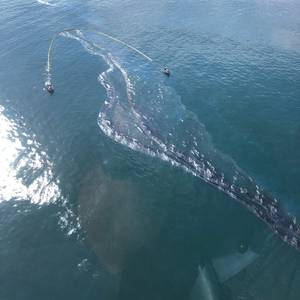Pipeline from California Offshore Oil Spill was Moved 32 Meters Along Sea Floor