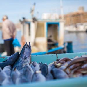 Fishermen Turn to Apps and AI to Tackle Climate Change