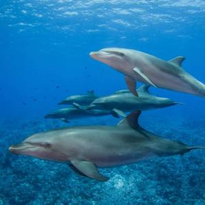 More Than 20 Dead Dolphins Found on Mauritius Beach Near Oil Spill