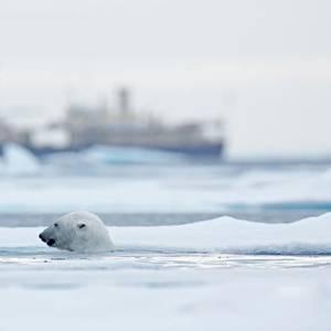 Draft U.N. Plan on Ship Fuel Ban in Arctic Seen as Lax