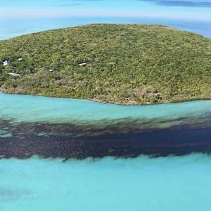 Sea Life Around Mauritius Dying as MV Wakashio Oil Spill Spreads