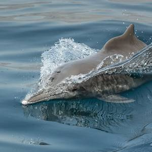 Rare Dolphins Return to Hong Kong as Coronavirus Halts Ferry Traffic