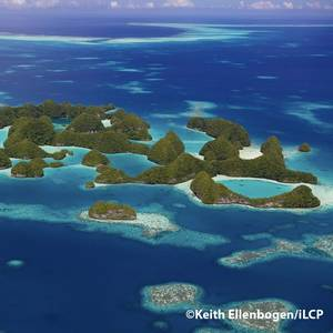 Coral Reef Health Report: Palau's Coral Reefs - A Jewel of the Ocean