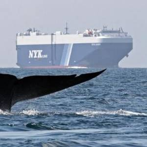 Shipping Companies Recognized for Efforts to Save Whales