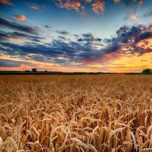 """BIMCO: U.S. Coarse Grain """"Madness"""" Triples Ton-Mile Demand"""