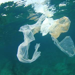 Efforts to Curb Plastic Litter in Oceans are Working