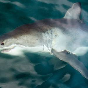 Sonar Technology to Be Used to Detect Sharks in the US