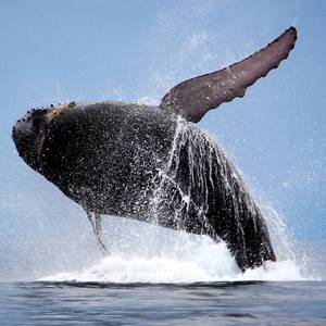 Panama Canal starts Speed Limits to Protect Whales
