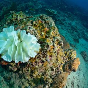 Corals at Risk as Underwater Heat Waves Strike More Often