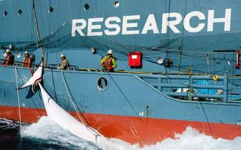 File A Japanese whaling fleet