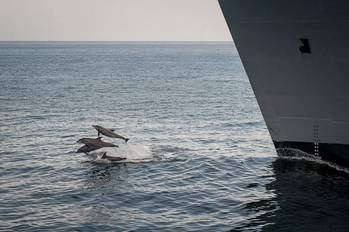 File Dolphins jump out of the water near the Military Sealift Command dry cargo and ammunition ship USNS Alan Shepard (T-AKE-3) during an underway replenishment with the guided-missile destroyer USS Stockdale (DDG 106), not pictured. (U.S. Navy photo by Mass Communication Specialist 2nd Class David Hooper/Released)