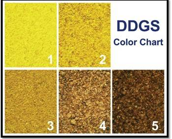 File Example of a DDGS color chart from the 'Guide to Distiller's Dried Grains with Solubles (DDGS)' issued by the United States Grains Council. (Source: http://www.nepia.com/our-services/loss-prevention/signals-online/cargo/ddgs-to-china/ddgs-to-china-be-aware-and-be-prepared/)