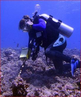 File Hanna Ake, field researcher working for Professor Hunter Lenihan, uses the Pulse 8X detector to relocate specimens in Moorea, French Polynesia