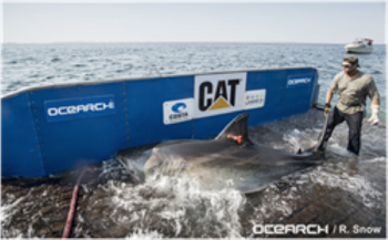 File Image courtesy of OCEARCH