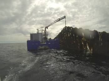 File Seaweed harvesting: Photo SES