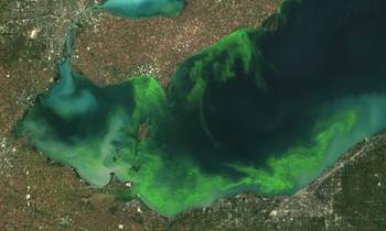 File Lake Algal Blooms: Image courtesy of NOAA