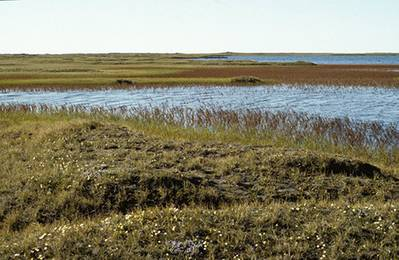 A coastal plain within the Arctic National Wildlife Refuge (Photo: USFWS)