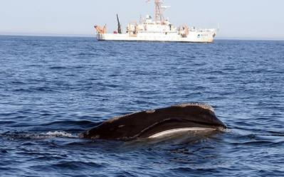 A right whale skim feeding with NOAA Ship Delaware II in the background.