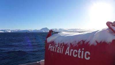 Arctic FoxTail (Photo: H. Henriksen)