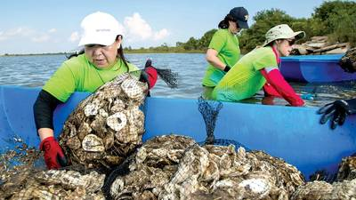 ASC volunteers bagged recycled oyster shells, then placed them in Galveston Bay to form new oyster reefs. Photo:  Aramco Services Company (ASC)