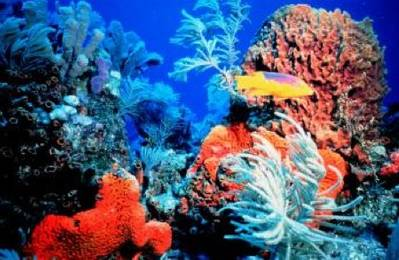 Coral ecosystem: Photo courtesy of NOAA