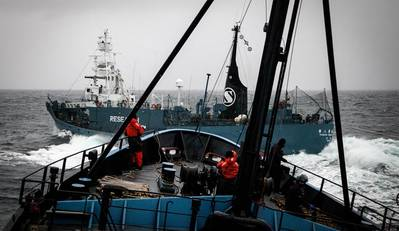Dangerous approaches: Photo courtesy of Sea Shepherd/Eliza Muirhead