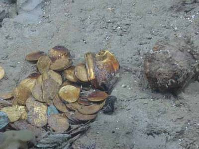 Gold coins and a gold box lie in situ on the site of another shipwreck (Black Swan) site salvaged by Odyssey Marine Exploration (Photo courtesy of Odyssey Marine Exploration)